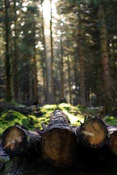 decepticun: Cruagh Logs | Nick-Egan