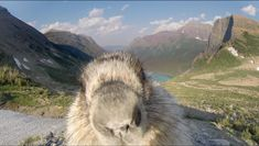 Curious Marmot Licks the Camera That Was Filming Time Lapse Sequence for Greenpeace Documentary