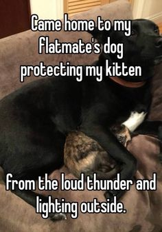 13 Pets Who Are Even More Adorable When They Are Afraid Of Thunder And Lightning #funny #picture