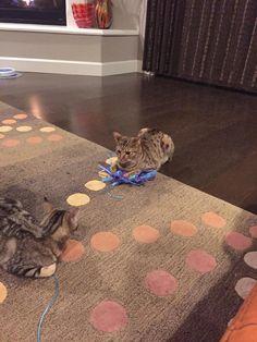 No-Sew DIY Cat Toy
