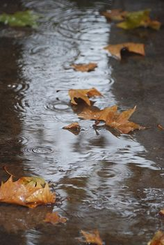 leaves and raindrops...