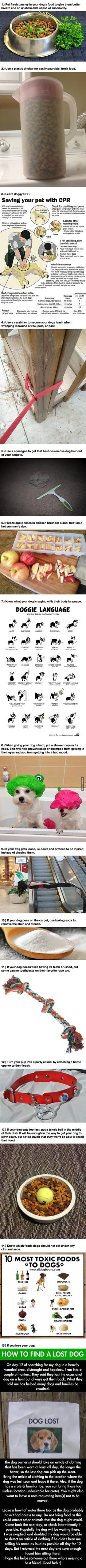 Great tips for dog owners! These ideas let your dog have a better experience and make your life a little easier. Good to know and easy to start doing!