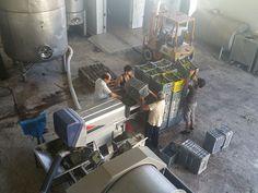 Semillon grapes crushing at Fikardos Winery, Cyprus wine | by Fikardos Winery