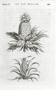 1658 Charles de Rochefort