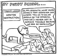 Off the Leash - A Doggy Blog - Page 4 of 30