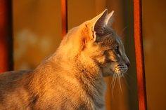 Cat, Autumn, Stainless, Evening Light