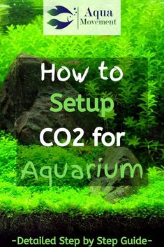 Do you know how to set up for your aquarium? In this article we will guide you to the perfect aquarium setup, so let's dive in! Co2 Aquarium, Aquarium Setup, Aquarium Design, Aquarium Fish Tank, Planted Aquarium, Fish Tanks, Aquarium Ideas, Freshwater Plants, Freshwater Aquarium