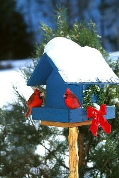 The combination of white snow, red cardinals and the Christmas spirit ..... what's not to love?!