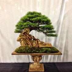 This is a larch bonsai growing on a statue of Penelope. It was created by bonsai artist Nick Lenz. #bonsai #trees #art #gardening #nature #sculpture www.adamsartandbonsai.com
