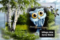 Owl, Bird, Animals, Animales, Animaux, Owls, Animais, Birds, Animal