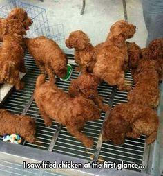Kentucky Fried Puppies