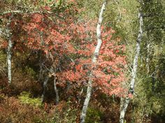 Beautiful Fall Foliage ~ Riding on the smaller chair lift at Park City Mountain Resort September 2015