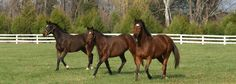 TRF at Montpelier, VA - A Thoroughbred Retirement Foundation Facility