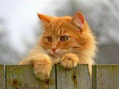 Beautiful orange colored cats!!