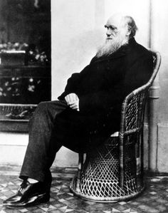 Happy Darwin Day! Here are our favorite stories about evolution - The Washington Post