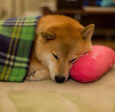 Pillow pet by marustagram.deviantart.com on @deviantART