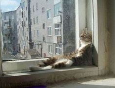Funny cats picture.