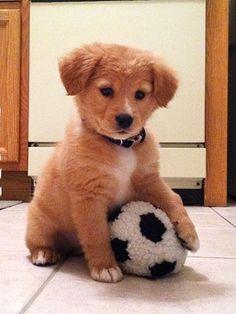 Chien avec un ballon de foot - chien heureux - chien protégé - Assur O'Poil