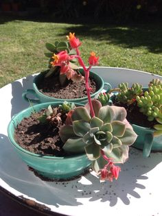 Lindo Cactus Y Suculentas, Succulents, Plants, Cute, Succulent Plants, Flora, Plant