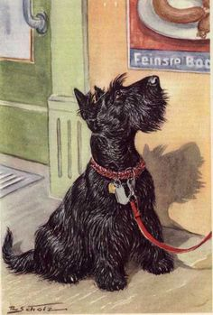 German Scottish Terrier Print, 1960s