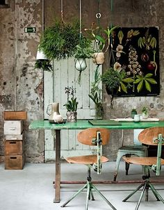 Indoor plants- hanging in a cluster above the kitchen table is so great!