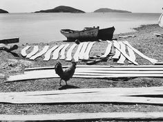 Toni Schneiders Archiv - Stiftung F. History Of Photography, World Photography, Travel Photography, Skopelos, Examples Of Art, Photography Exhibition, Old Photos, Hahn, Painting