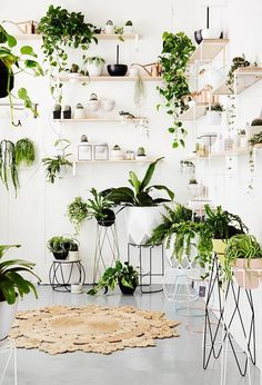 The New IVY MUSE store in Prahan, Melbourne -- Love this display of bracketed raw wood and white floating and open shelves filled with potted plants, succulents, ivy and tropical plants from floor to ceiling, and on wire plant stands in between.
