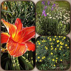 Tanya Lynn Photography  Special Effects Garden Print $200.00