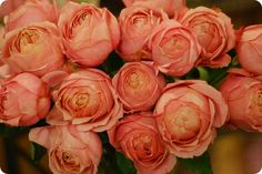 cabbbbbage roses. ahhhhhhh i adore these roses