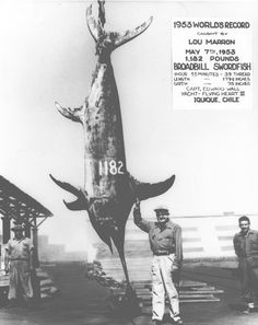 1953 The world record swordfish was caught in Chile: 1,182 pounds. #deepseafishing