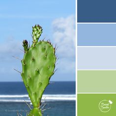 Blue Ocean colour palette by Brand Smoothie