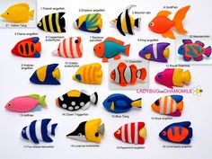 COLORFUL FISHES OF THE OCEAN CORAL REEF