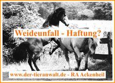 WEIDEUNFALL | HAFTUNG PFERDEPENSION: Pferd verletzt Stute | Pferd, Haftung, Weideunfall | Tier anwalt #Ackenheil