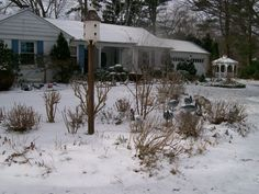 Dad's decoys in the front garden, winter 2012