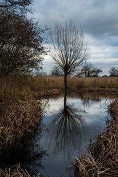 Visiter #Londres avec le #LondonPass : le #Wetland Centre