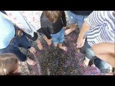 A vista de zapatero - la celebración: turistas pisando uvas #Thabuca10 #RiojaAlavesa