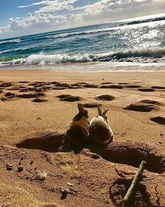 Enjoying the beach the sea the waves the sun and rabbits. Always rabbits. Funny Bunnies, Baby Bunnies, Cute Bunny, Bunny Bunny, Animals And Pets, Baby Animals, Cute Animals, Beautiful Creatures, Animals Beautiful