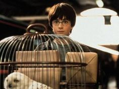 11 Harry Potter fan theories that are actually pretty convincing Harry Potter Fan Theories, New Harry Potter Book, Harry Potter Scar, Harry Potter Spells, Harry Potter Wedding, Harry Potter Outfits, Harry Potter Facts, Harry Potter Hogwarts, Harry Potter World