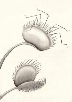 IL·LUSTRACIÈNCIA: Venus flytrap - Carnivorous Plant  -  Lara Delgadi...
