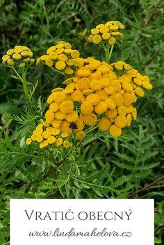 Detox, Garden, Fitness, Plants, Catalog, Garten, Lawn And Garden, Gardens, Plant