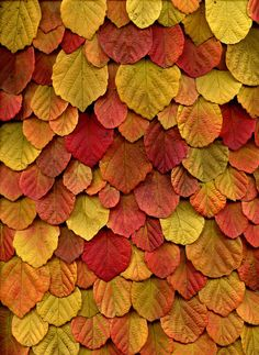 Leaves, love the colors and the texture it creates.