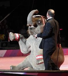 Not even a year old baby Hugo set for a life of misery with Cole Brothers Circus!