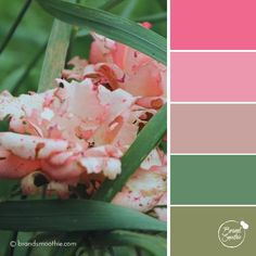 Rose Blush colour palette by Brand Smoothie