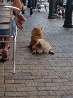 This fox-like dog is