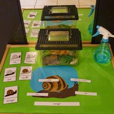 pets unit preschool \ pets unit preschool ` pets unit preschool activities ` pets unit preschool crafts ` pets unit for preschool ` preschool pets unit free printable ` preschool pets unit lesson plans ` preschool pets unit dramatic play Preschool Lesson Plans, Preschool Activities, Science Area, Petite Section, Very Hungry Caterpillar, Dramatic Play, Snail, Pet Care, Kindergarten