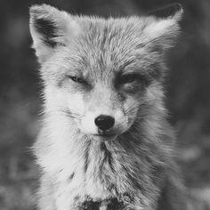 Aubin & Wills Fox