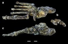 Homo Naledi brings new surprises that could change the history of evolution for modern humans. Is this finally one of the missing links in human evolution that paleontologists have been waiting for?In