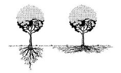Tree roots grow like the drawing on the right - most are within the top 2 inches of the soil