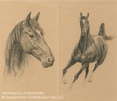 Sketches of Joey from War Horse