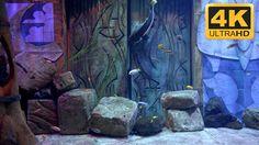Relaxing aquarium screensaver for TV or PC, in 4K or HD :)